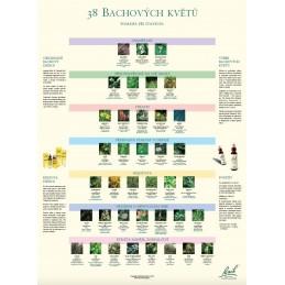 Plakát bachových esencí